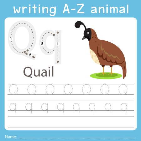 Illustrator of writing a-z animal q quail Ilustração