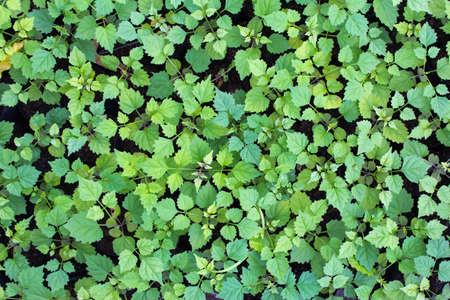 Green leaf Hintergrund Standard-Bild - 29840478