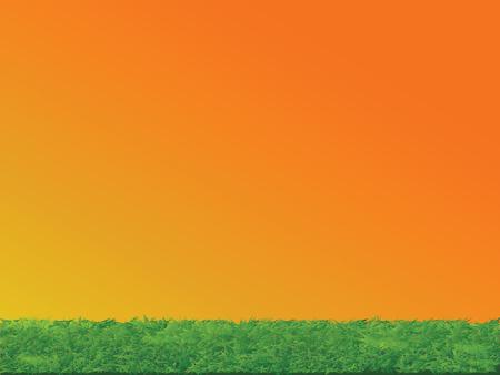sunset sky: Green Grass and Sunset Sky Landscape Background