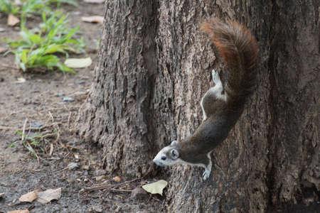 tri  color: tri colored cute squirrel on tree