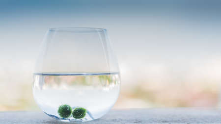 carbondioxide: My marimo take photo at my room bangkok ,thailand but i bought them from  mountain ,japan