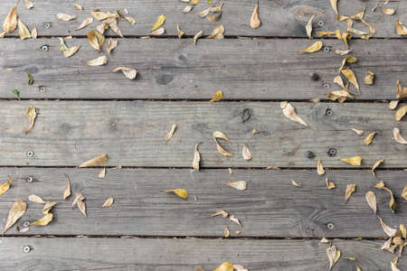 dry leaf: falled dry leaf of suicide tree on wooden deck Stock Photo