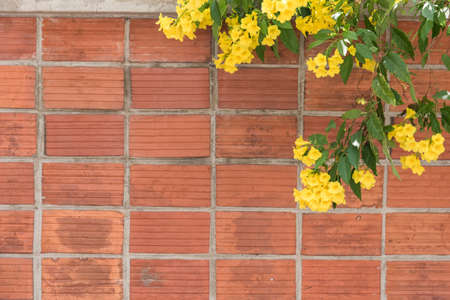 yellow flower on antique orange clay brick wall texture background photo