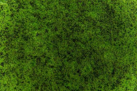 green moss background texture beautiful in nature Standard-Bild
