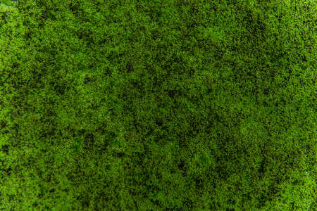 green forest: green moss background texture beautiful in nature Stock Photo