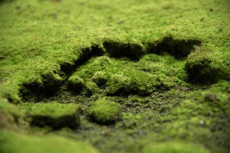 green moss background texture beautiful in nature Reklamní fotografie