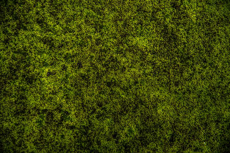 soil texture: green moss background texture beautiful in nature Stock Photo