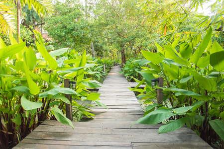 tropical garden: ornamental wooden door gate open to tropical garden style Stock Photo