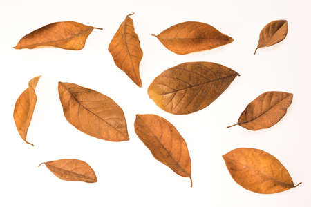 varies size dry leaf isolated on white background Banco de Imagens