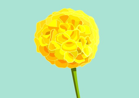 Marigold isolated on blue background illustration