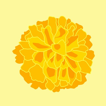 Marigold isolated on yellow illustration.