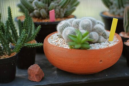 types of cactus: Different types of cactus in a pot