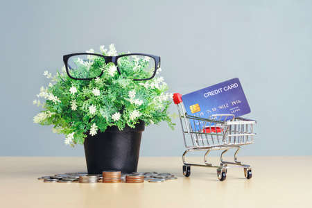 Small plants with frugality save money with Credit card and shopping cart. Concepts of staying at home, saving lives, lifestyle shopping, internet banking shopping, and online shopping at home.