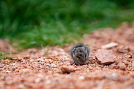 mouse explores outside Imagens