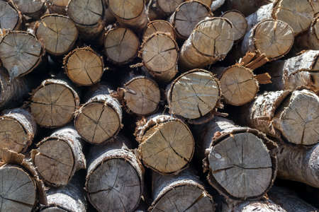 pile of logs: Pile of wood logs Background