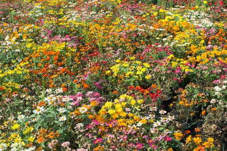 graden: colorful of flowers background in graden