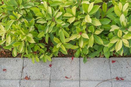 tropical shrub: Gravel and green shrub decorate in tropical garden