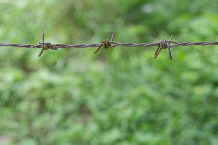 barbed wire in blur grass green nature background
