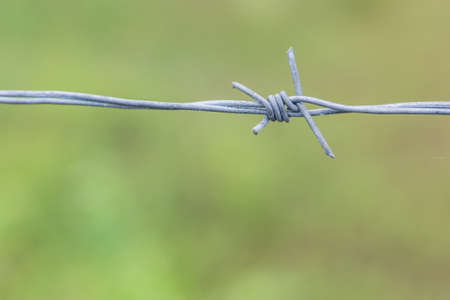 fence close up of barbed wire in blur grass green nature background Stock Photo