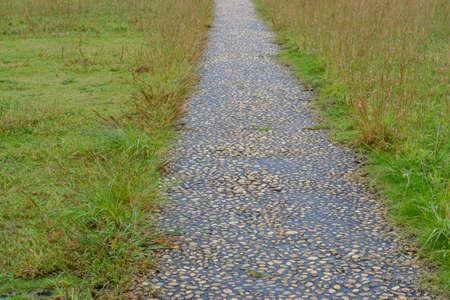 walkway with green grass in garden Stock Photo