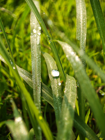 another: Frosts occur by natural wonders, another who found passion, admiration, because it occurs, whether its summer or winter or spring rain. To the Sun in the morning, will shine even more interesting to watch beautiful glitter students. Stock Photo