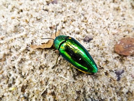 Insect Stock Photo - 13007923