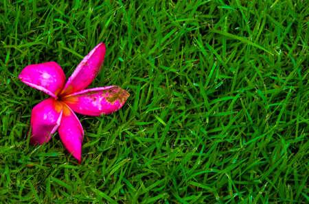 Lawn Stock Photo - 15581539