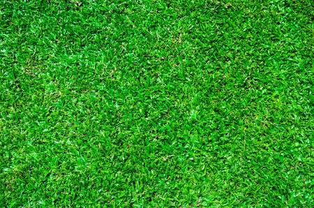 Lawn Stock Photo - 15581540