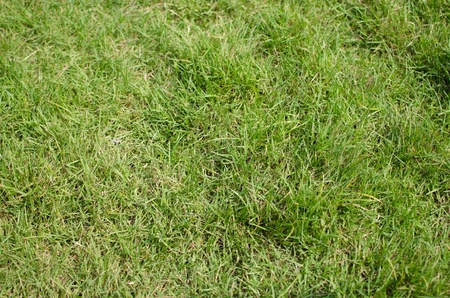 grass Stock Photo - 16440375