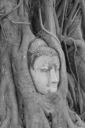 Buddha head in tree at Ayutthaya, Thailand  photo