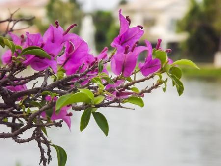 Beautiful pink flowers  Stock Photo - 17562772