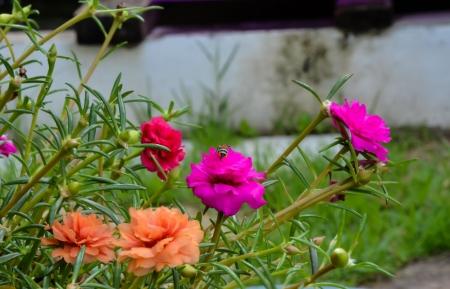 Beautiful pink flowers Stock Photo - 17562773