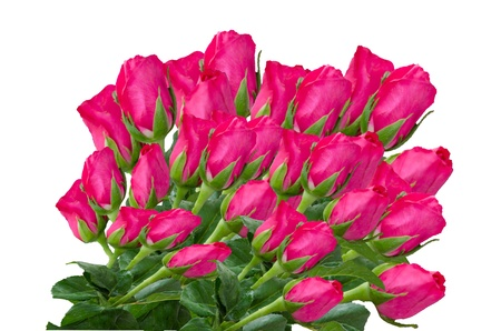 Pink rose  Stock Photo - 17715281