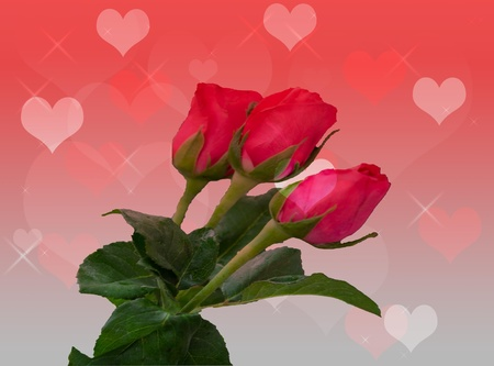Roses on a red background with heart pattern Stock Photo - 17715271
