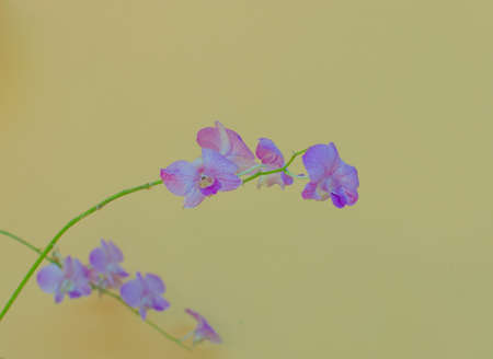 Purple orchid  On a yellow background Stock Photo - 18848166
