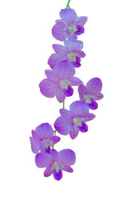 Purple orchid. On a white background. Stock Photo - 18904218