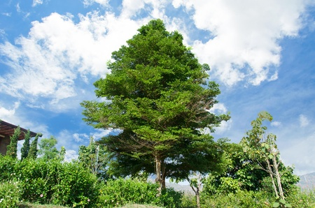 Green trees and beautiful bright blue sky. Stock Photo - 19470064