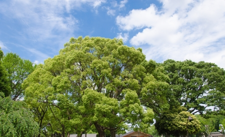 Big trees in the garden ueno. Japan. Stock Photo - 20380274