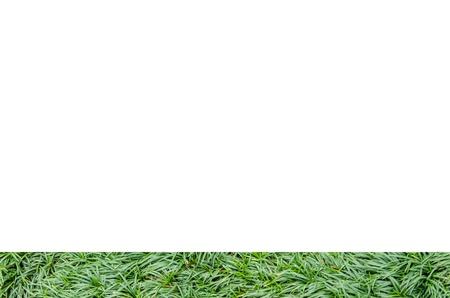 Gramado fresco vista grama topo