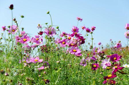 jardines flores: Los jardines japoneses de flores plantadas en la provincia de Ibaraki.