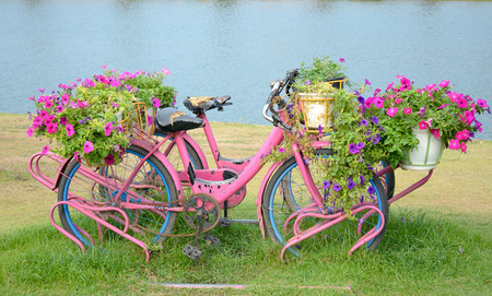 Flowers on the bicycle Is a vintage Stock Photo