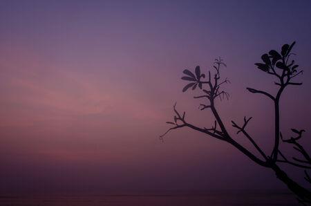 trees on the beautiful sunset background. photo