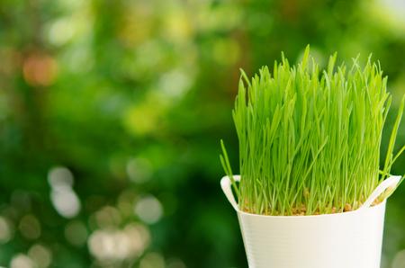 Erva fresca do trigo por Juicing Banco de Imagens