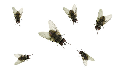 fly on the white background