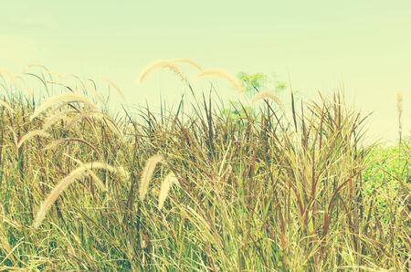 Vintage dandelion with blue sky background. photo