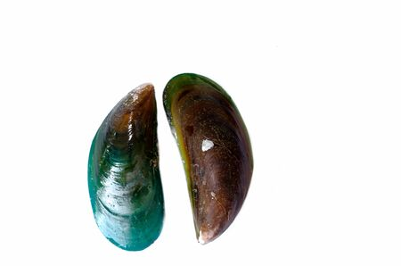 Green mussel isolated on the white.