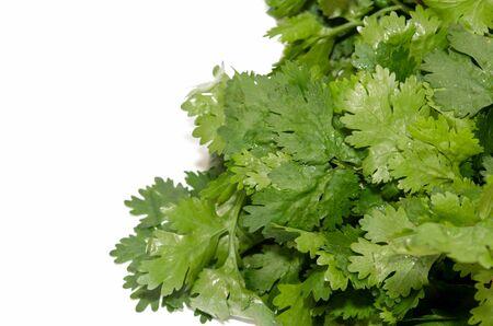 culantro: El cilantro aislados en el blanco Foto de archivo