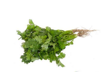 cilantro: El cilantro aislados en el blanco Foto de archivo