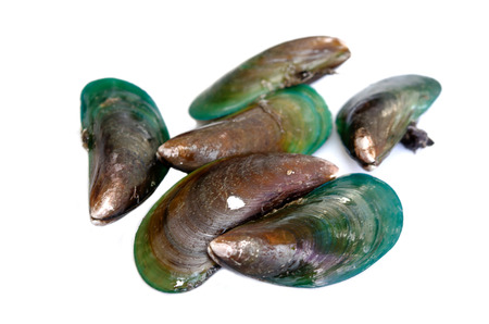 mussel: Green mussel isolated on the white.