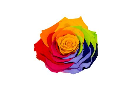Multicolored roses isolated on the white.